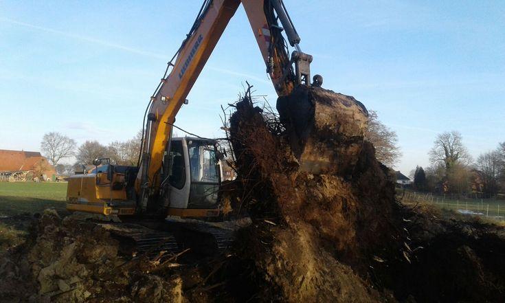 Die Baumwurzeln müssen leider raus...bei der Arbeit mit einem #Liebherr 900 #Kettenbagger 😉