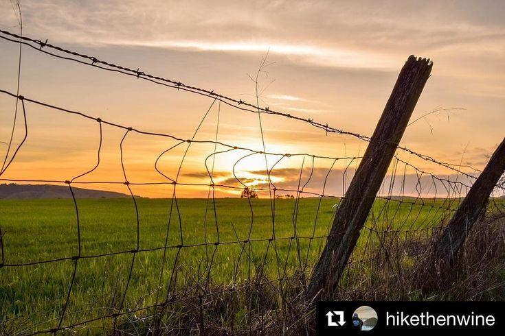 #Repost @hikethenwine  From the back roads of #Sonoma.  #hikethenwine #sonoma_valley #winecountry #rei1440project #igersnorthbay #IAMGenerationImage #nikonnofilter #wildbayarea #visitcalifornia #optoutside #wildcalifornia #liveoutdoors #localadventurer #california_igers #californiacaptures #outsideculture #BetterOutHere #abc7now #naturalcalifornia #werehikers #outdoormaster #lovewhereyoulive #rawcalifornia #exploremore #takemoreadventures #liveauthentic #neverstopexploring