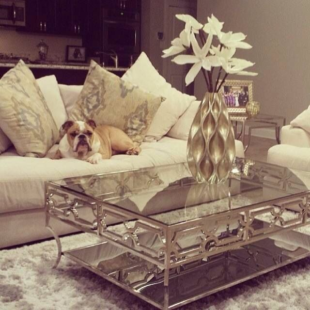 i love this contemporary silver glass coffee table and maybe the doggie in this pic too!