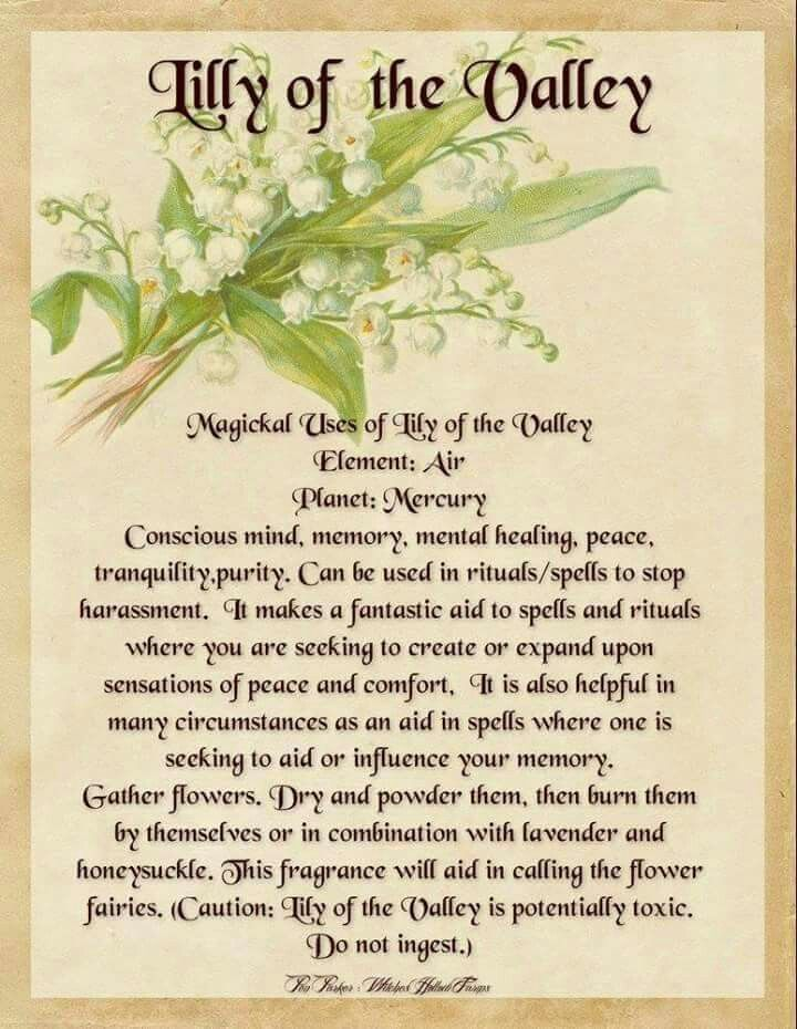 1000 Images About Magical Herbs Incense And Oils On