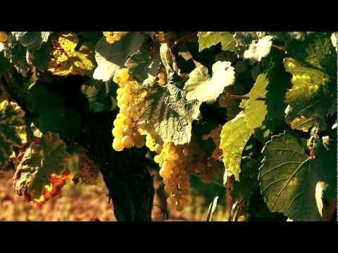 Wine Country Presented by Alain Pinel Realtors. #napa #sonoma #winecountry