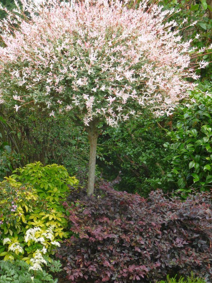 Les 25 meilleures id es de la cat gorie arbre japonais sur pinterest bonsa s plantes de - Arbre pour jardin japonais ...