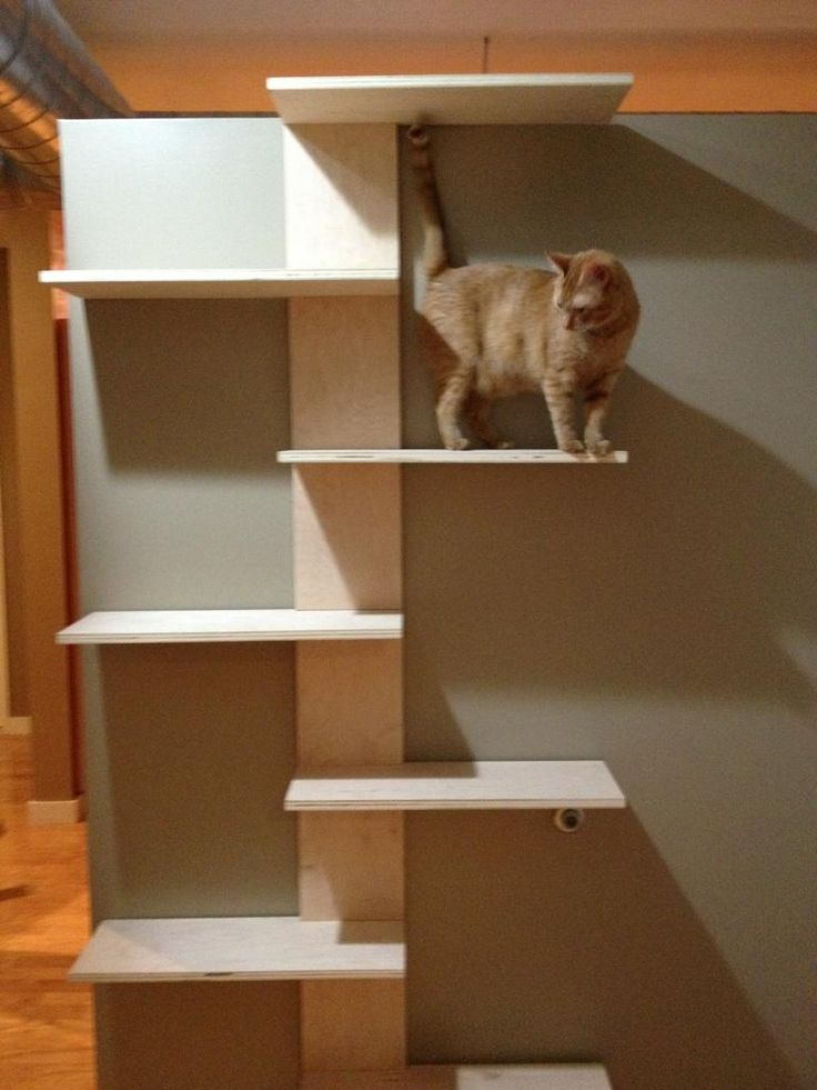 1000 images about cat shelves condos trees perches on for Bookshelf cat tower