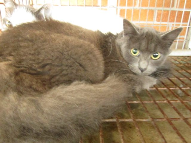 Gallery of council pounds and their impounded animals - Rescue Rex TAREE NSW NOT CHIPPED