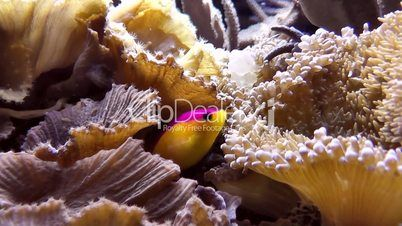4--2276538-Seewasseraquarium.jpg 402×226 Pixel