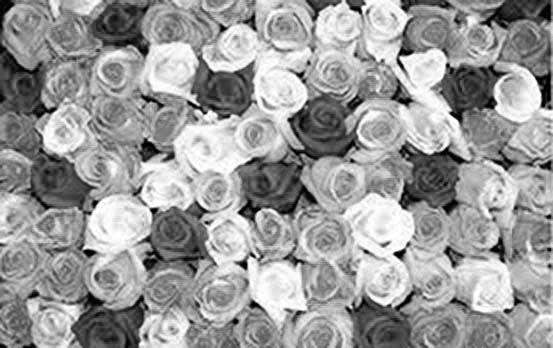 Imagen en blanco y negro.