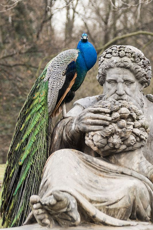 Statue and peacock, Warsaw, Masovian, Poland