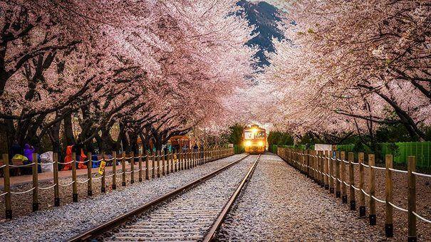 diaforetiko.gr : 203 Μαγικά τοπία:  Τα 24 ωραιότερα τούνελ από δέντρα στον κόσμο! - Gyeonghwa, Νότια Κορέα