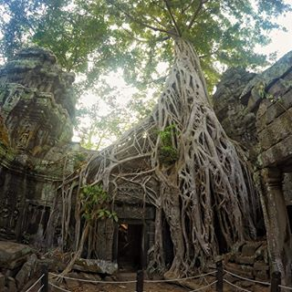 : Famous for being the backdrop in Tomb Raider, Ta Prohm temple is now being over run by nature  www.thegirlswhowander.com #thegirlswhowander #cambodia #siemreap #angkor #taprohm #tombraider  #girlsborntotravel #backpacker #LiveIntrepid #wannagohere #sheisnotlost #passportcollective #instatravel #photooftheday #picoftheday #travel #iphonephotography #blogoftheweek #linkinbio