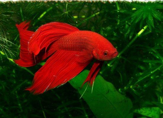 Peixes-para-aquário-pequeno-dicas-2