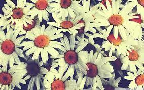 Kuvahaun tulos haulle flower vintage wallpaper