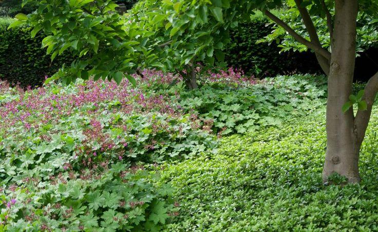 bodendecker gegen unkraut gardens planting and perennials. Black Bedroom Furniture Sets. Home Design Ideas