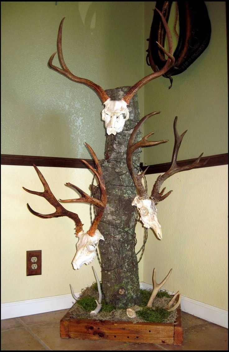 Deer skull mount ideas - My Homemade European Blacktail Mounts Find This Pin And More On Deer Skull Ideas