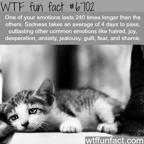 How long emotions can last - WTF fun fact