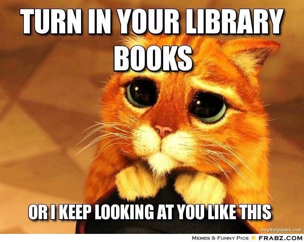 Turn in your library books... - Beggin' Cat Meme Generator Captionator