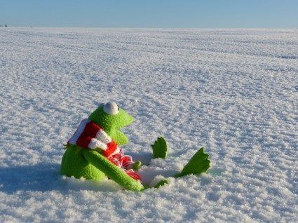 Kermit adores Luxury Christmas Suffolk Holiday Cottage breaks - Winter
