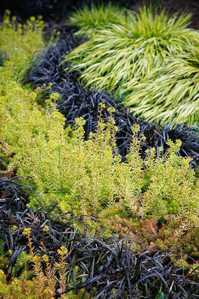 Golden Japanese forest grass, black mondo grass, variagated sedums -   Garden by Corson & Stugger (Photo by Joshua McCullough)