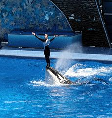 Free Seaworld Coupons Are Available To Save On Park