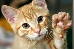 Kedilerin Neden Bıyığı Vardır?