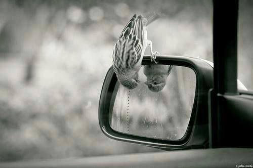 Bird on the rearview :)