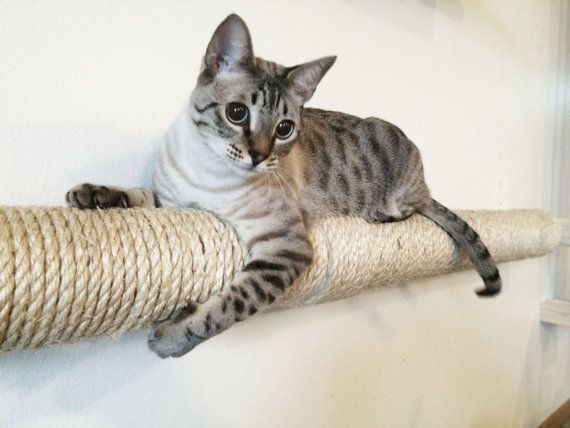 Horizontal Wall Sisal Pole from CatastrophiCreations on Etsy – for the cat