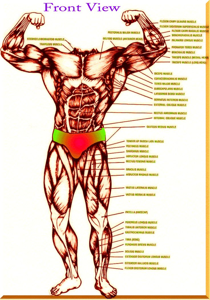 kinesiology of the human body pdf