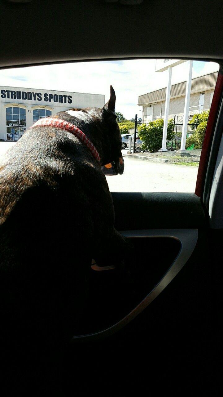 Enjoying the car.