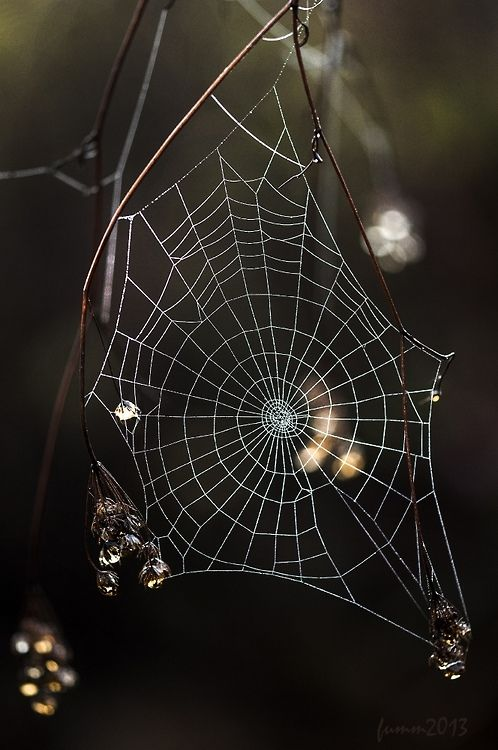Webs fascinate me.                                                                                                                                                                                 More