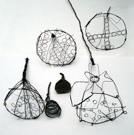 wire drawings of seeds....Steven Follen
