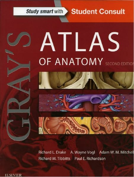 Second edition pdf grays anatomy