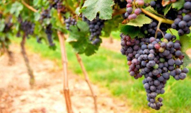 Preschool Bible Lesson: Jesus is the the Vine