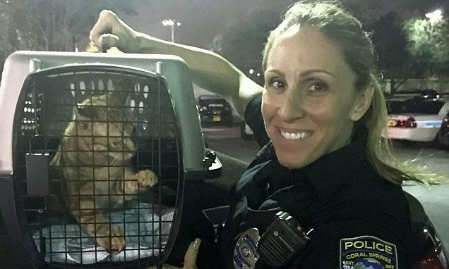 Kindhearted cop has rescued more than 60 cats | Daily Mail Online