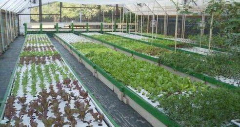 Commercializing aquaponics