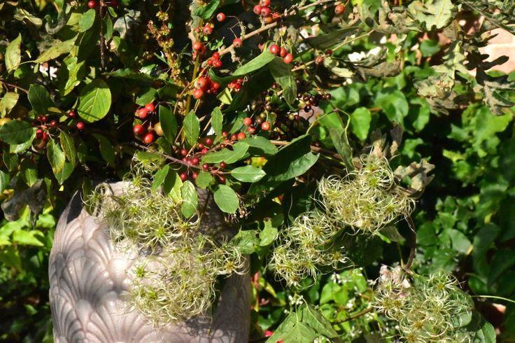 Ramas otoñales: espino albar, cornejo, eucaliptus, acedera y clematis.