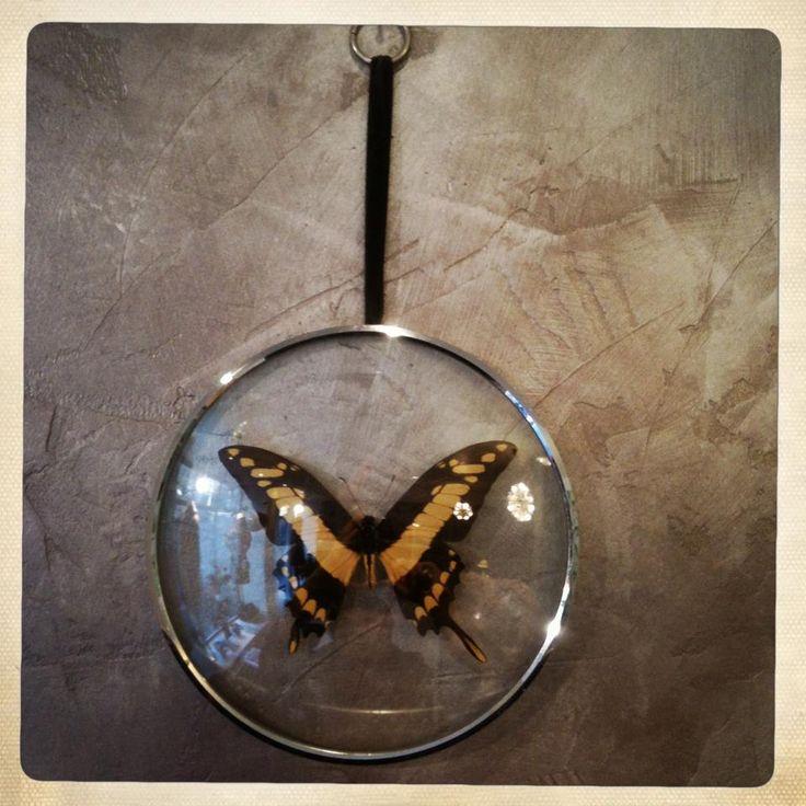 le dernier papillon
