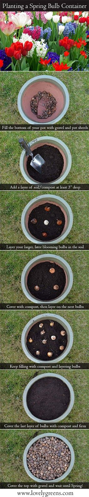 Create a Springtime Flowering Container - an easy and beautiful project that will flower all spring!  #gardening #spring #bulbs #flowers #home