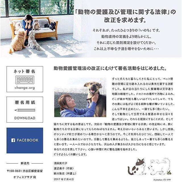 動物の命を愛する皆様へのお願い 🙏🏼 浅田美代子さんが『動物愛護管理法』の改正に向けて署名活動をしてみえるのを知っていますか? 繁殖のためだけに ろくな食事も与えられず 汚物にまみれて生かされているワンちゃんやネコちゃんたちの画像を私は見て 本当に心を痛め 涙が出ました。 次回法案改正は来年平成30年【2018年】予定です。 それまでに1人でも多くの署名を集める事が出来たら 1匹でも多くの命を守る事が出来ます! 私も先月 ネット署名しました。 とても簡単で1分かかりません! 1人でも多くの方にこの現実を知って頂き 悪徳業者撲滅!殺処分ゼロ! 目指したいです! 賛同していただける方は miyokoasada.com からネット署名出来ます! よろしくお願い致します。 #pet#dog#cat#poodle#fashion#ootd#プードル#トイプードル#チワワ#ヨーキー#シュナウザー#パグ#フレンチブルドッグ#わんこ#いぬ#ねこ#犬バカ部#犬#子犬#猫#愛犬#子供#子供服#ペットウェア#ペットショップ#キッズ#キッズウェア#キッズコーデ#女の子#男の子