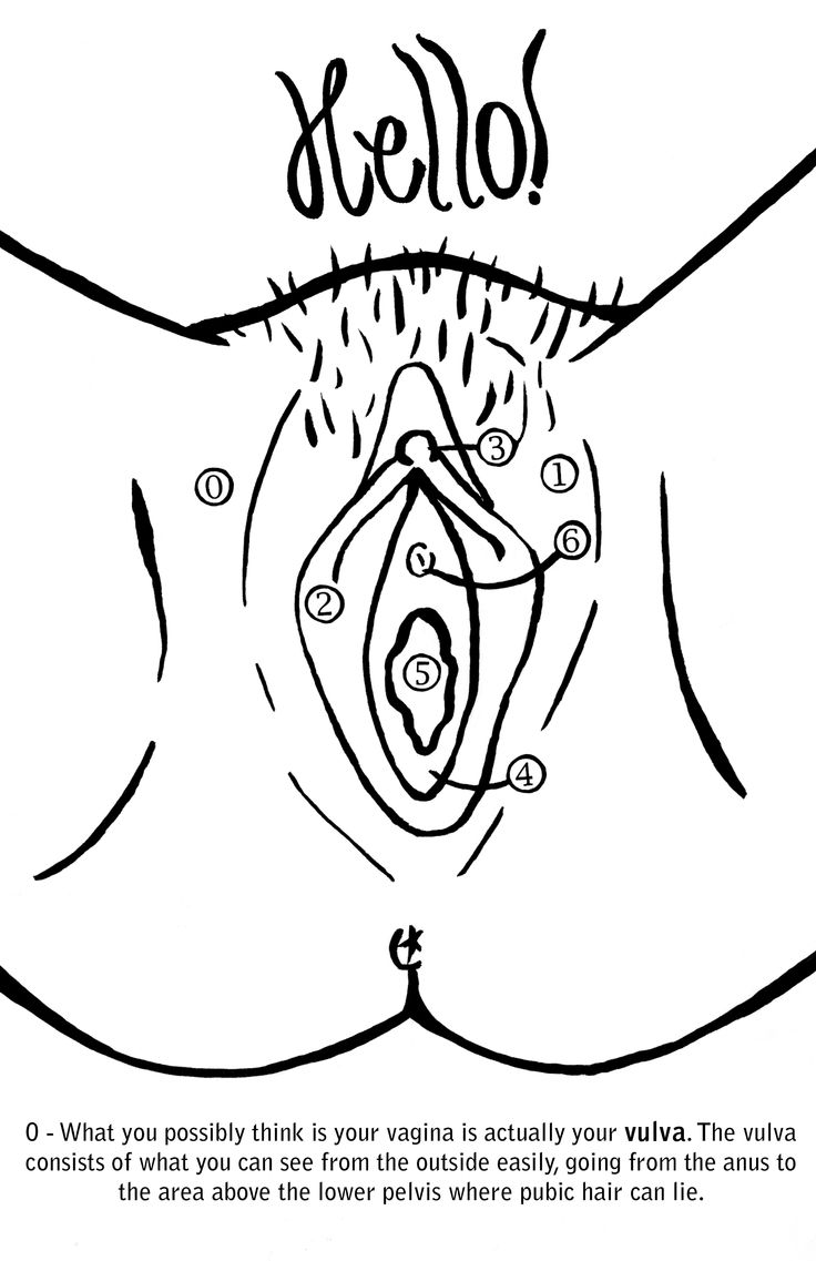 Hello Vagina - This Coloring Book Was Motivated By The Common Misconceptions Around -3451