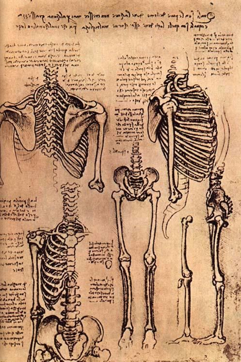 dessin leonard de vinci skeletons 40 56 dessins de Leonard De Vinci  histoire design art