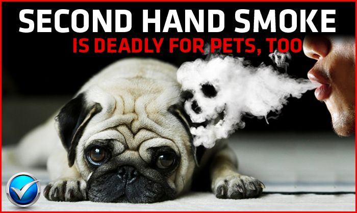 Keep second hand smoke away from your pets.
