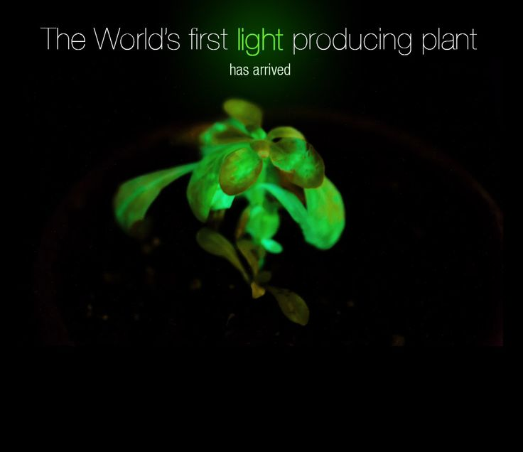 Using synthetic biology (DNA rearrangement), biotechnology company bioglow has developed autoluminescent plants. Great stuff. You can buy one at the auction starting at January 31st.