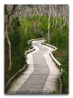 Great memories of our nightly walk along the boardwalk! Wilson's Promontory National Park