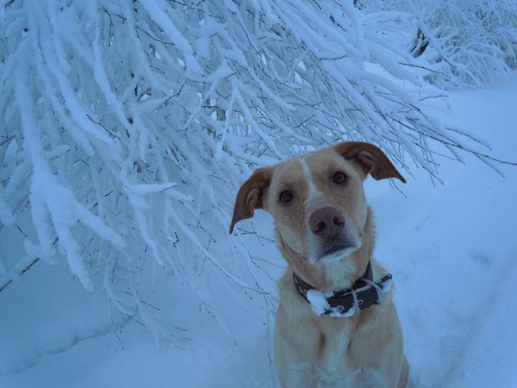 Finnish winter, Nalle likes :)