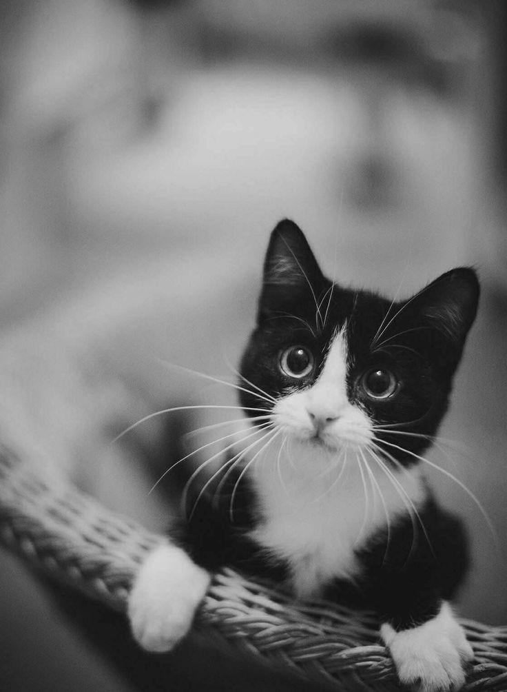 сайт предлагает картинки про черно белых котят занятий детьми