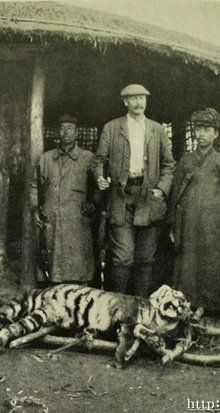 Tigers of Korea 100 Years Ago