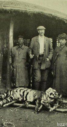 Tigers of Korea 100 Years Ago