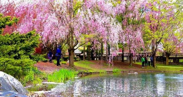 You Can See Cherry Blossoms In Full Bloom At This Japanese Garden In Ontario This Spring Japanese Garden Landscape Japanese Garden Water Lily Pond