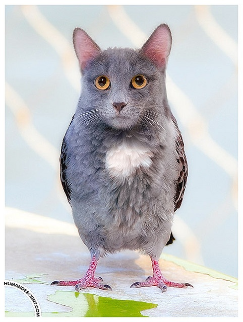 24 Best Animal Edit images | Photoshopped animals, Animals ... |Hilarious Animal Edits