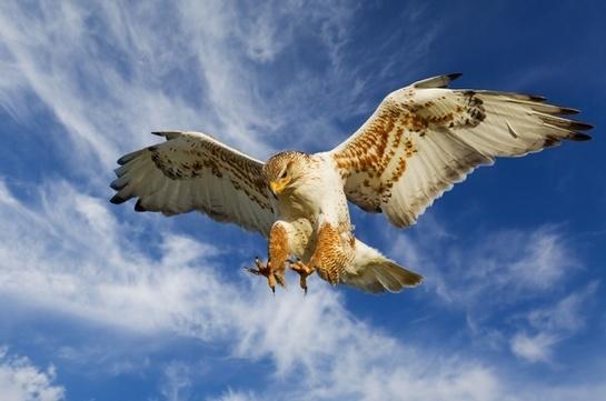 O dron? poate prinde obiecte din zbor, ca o pas?re de prad? (VIDEO)
