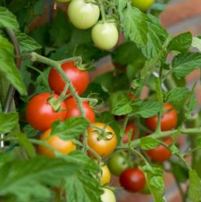 how to grow fruit trees hydroponically
